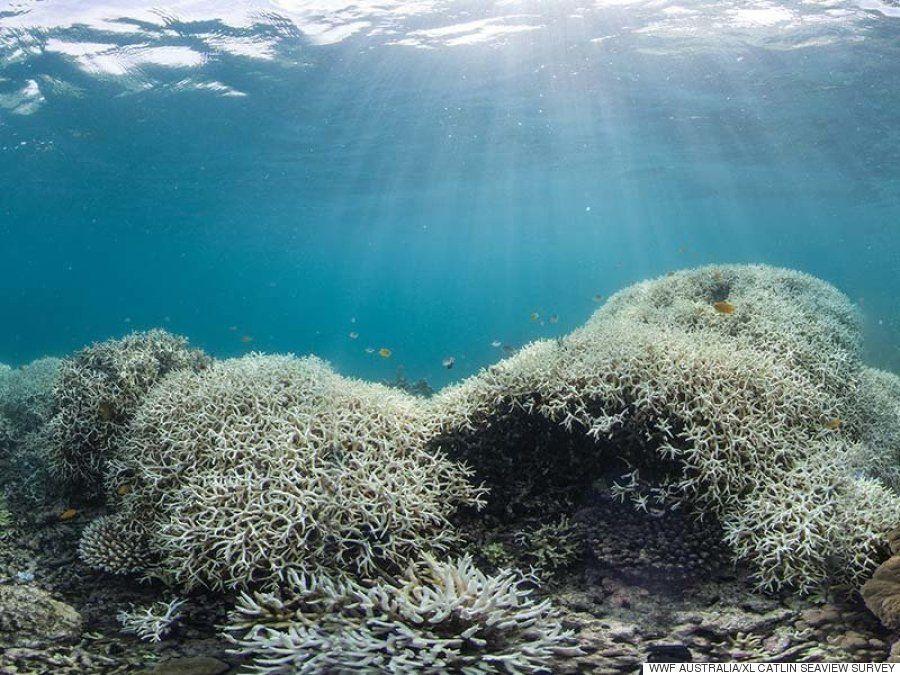 グレート・バリア・リーフは、完全に生態系が崩壊している