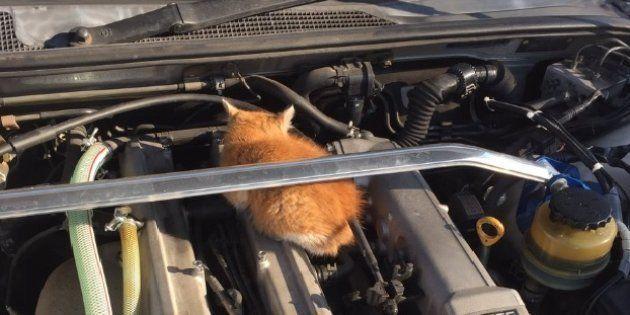 エンジンルームに入っている猫(ミライさん/Twitter提供)