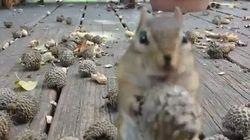 ドングリを詰め込めるだけ詰め込む姿に、リスの王道を見た【動画】