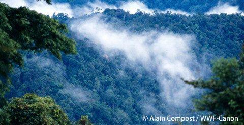 森の利用と保全の両立に向けて インドネシア・マハカムウル県の農業・林業局と覚書を締結