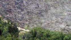 「持続可能な森林管理方針」はどこへ?皆伐続けるAPRIL社