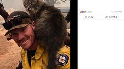 カリフォルニア山火事で救出された猫さん、隊員の肩にピッタリ寄り添い離れなくなる