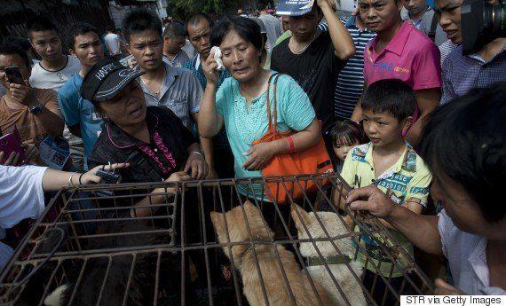 「犬肉祭」で売りに出されていた100匹の犬に救世主、中国人女性が買い取る【動画・画像】