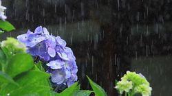 日本人は「梅雨(つゆ)」が好き? こんなにたくさんある!「梅雨」がつく季語