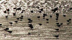 有明海の2カ所の干潟が「ラムサール条約」登録湿地に