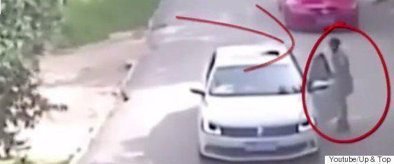 サファリパークで車から降りた女性、トラに背後から襲われる(動画)