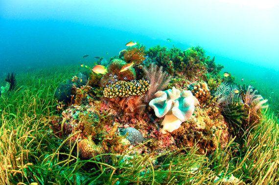 海草は除菌も担う海の万能選手