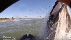 ボートで遊んでいたら、目の前でザトウクジラがザッパーン【動画】