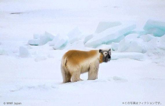 WWF、南極大陸で新種、ナンキョクグマを発見!