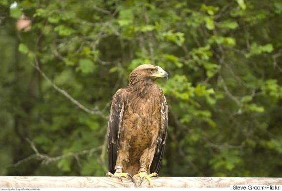 軍事基地が自然公園に 冷戦のおかげで野生動物が繁栄したドイツ