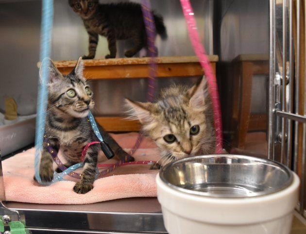 TNR日本動物福祉病院で保護されている猫たち