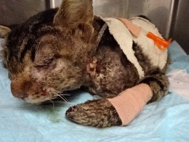TNR日本動物福祉病院で保護されている猫