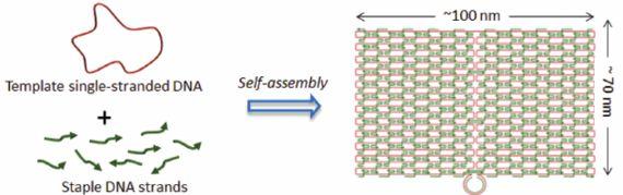 ここまでできる!?「DNA折り紙」の最先端(1)