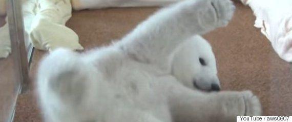 中国には「世界で最も悲惨な動物園」がある 逃げ場のないシロクマの悲惨な姿は...(画像)