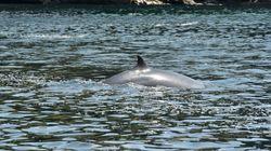 IWC脱退で日本の捕鯨はここが変わる。4つのポイント