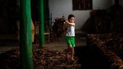 米国 たばこ農場、10代の子どもの就労を禁止すべき
