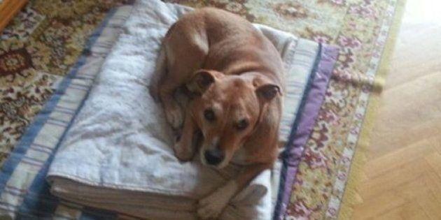 エボラ出血熱に感染した犬は殺処分するべき? ソーシャルメディアで大論争に
