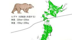 2014年秋、クマ大量出没の予測