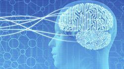 脳神経回路を正しくつなぐ仕組みを発見、さまざまな疾患の原因究明に貢献へ