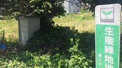のど元過ぎたら草ボーボー!懲りない江戸川区生産緑地