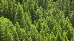「森を守るマーク」FSC認証製品が拡大 日本初FSCマークのついた紙パック飲料が登場