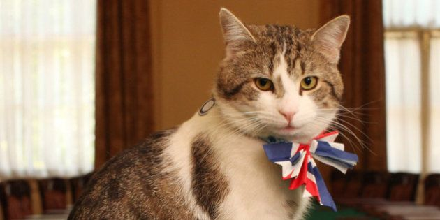 LONDON - APRIL 28: Larry, the Downing Street cat, gets in the Royal Wedding spirit in a Union flag bow-tie...