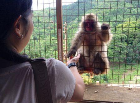 イギリス女性が選んだちょっと変わった日本の10の観光スポット