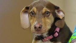 裸で震えていた3歳の女の子の命を救ったのは、虐待・保護された犬「ピーナッツ」の第六感だった