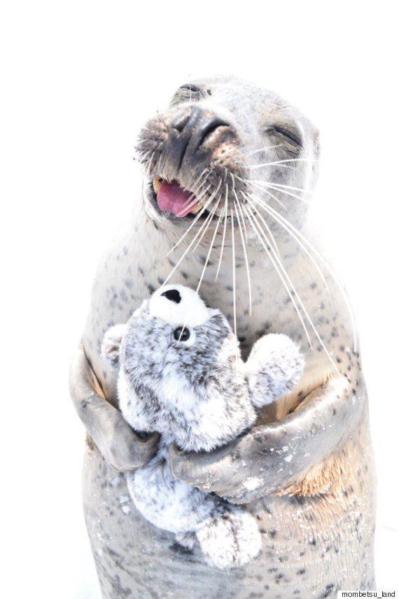 「この微笑みを見て」ぬいぐるみを抱っこするアザラシが世界を魅了