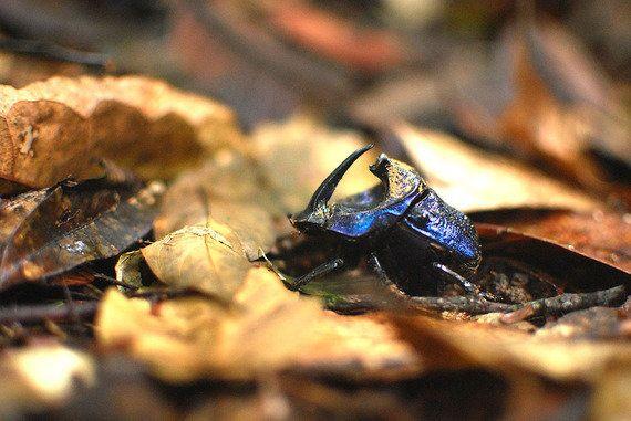 熱帯林の撹乱は生物多様性を低下させる