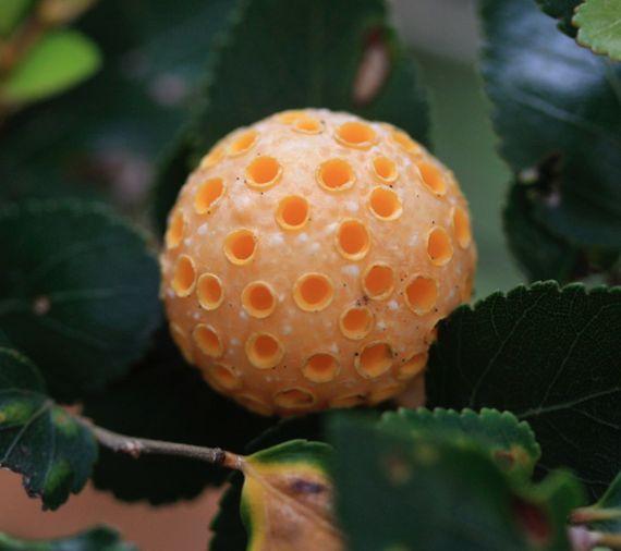 珍奇な菌類