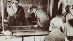 「パブロフの犬」の脳内の仕組み、約100年を経て解明