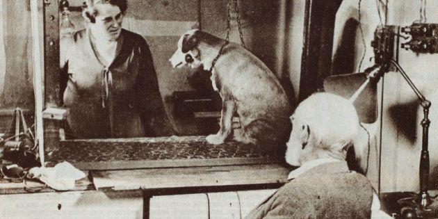 『パブロフの犬』の脳内の仕組み解明