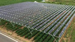 ソーラーシェアリングでエネルギー兼業農家を目指せ