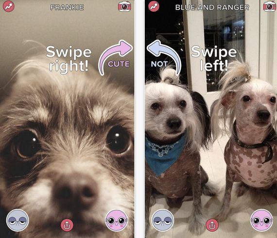 バズフィードの新動向:ネコ写真共有アプリ「Cute or