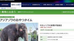 ゾウが振り回した鼻が当たる 動物園の飼育員男性が死亡