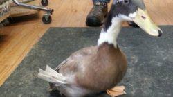 3Dプリンター製の義足で、脚を失った動物たちが生きていける