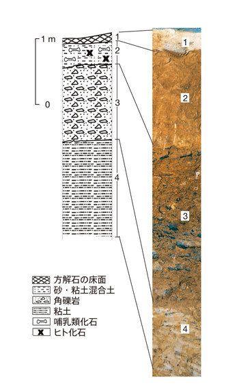 中国で出土した歯が示す、初期人類の旅