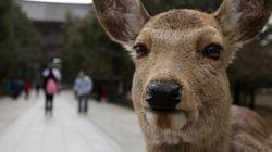 奈良のシカ「うんめえぇぇ」青春18きっぷを食べる