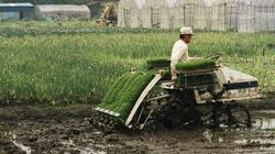 「2022年問題」に警鐘を鳴らす~都市農地のゆくえ:研究員の眼
