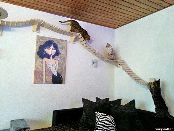 ドイツの猫アスレチックハウスの、本気度がすごい