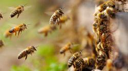 グローバル社会を支える小さな昆虫たち