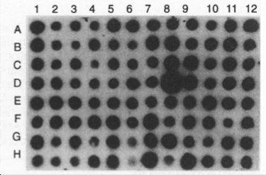 ゲノムに標識を埋め込まれた細菌たち
