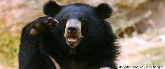 「クマだと思い込んでしまった」