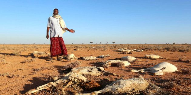 An internally displaced man looks at the carcasses of his goats and sheep in the outskirts of Dahar town...