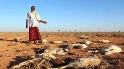 ソマリアで大規模干ばつ、2日間で110人死亡 人口の半分620万人が深刻な食糧不足に