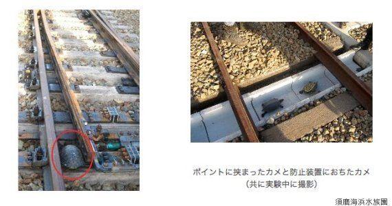 カメを救い列車遅延をなくす画期的な技術を開発 水族館とJR(動画)