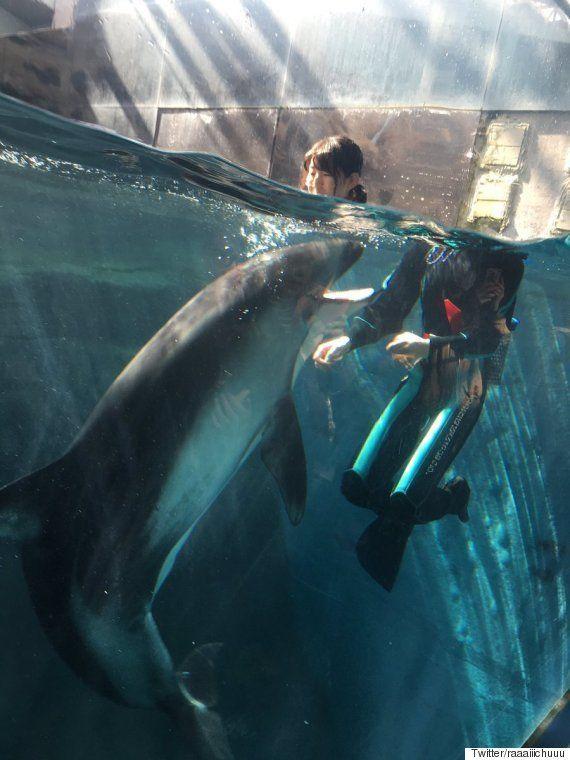 イルカと泳ぐお姉さんの首が大変なことに(画像)