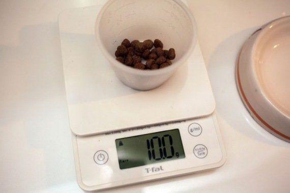 猫ダイエットのコツは「計量」にアリ