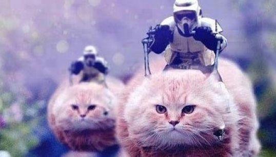 テロ警戒で厳戒のベルギー、Twitterはなぜかネコだらけ(画像集)